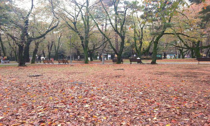 千本桜が咲き乱れる!さくら名所100選の地「大宮公園」
