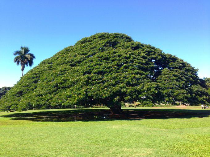 この木なんの木?緑溢れるモアナルアガーデン