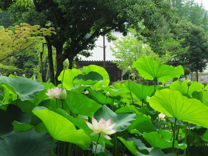 薬師堂と蓮池