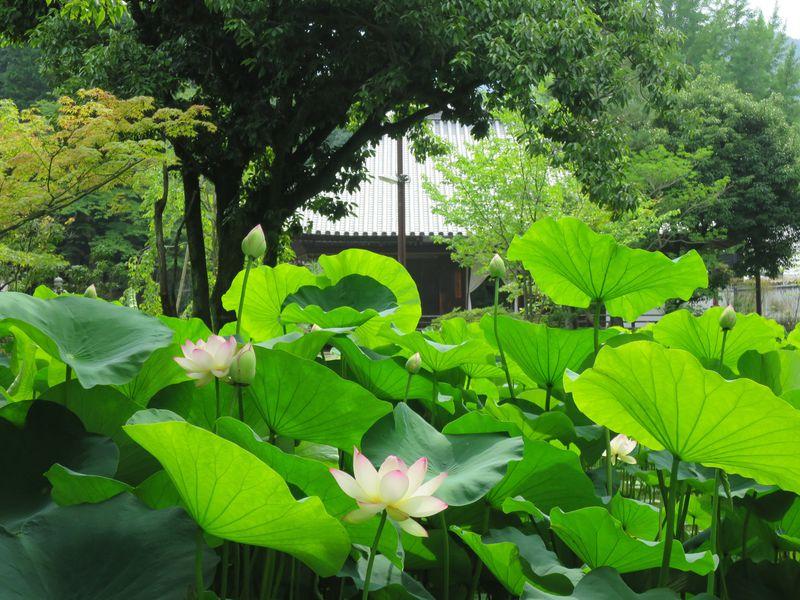 蓮池と阿弥陀如来像に感動!京都伏見・親鸞ゆかりの法界寺