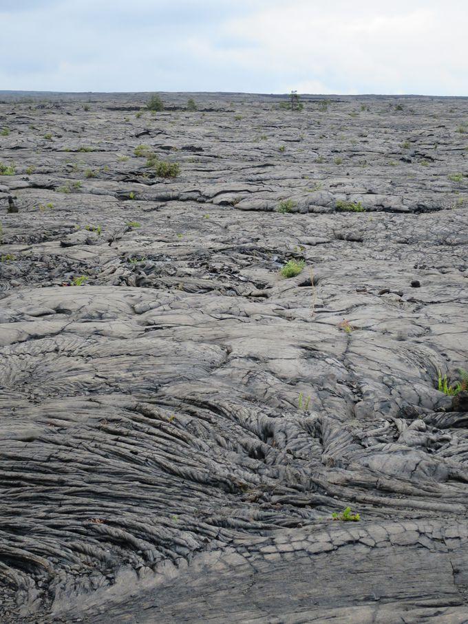 『マウナ・ウル溶岩台地』で溶岩ウォーク