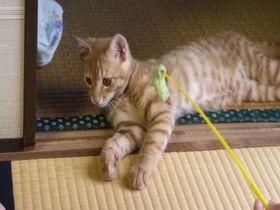 猫と触れ合える温泉宿!静岡・宇佐美「海風荘」へ行こう|静岡県|トラベルjp<たびねす>