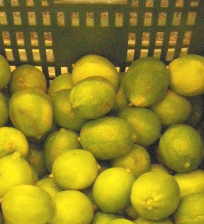 お店の外にもレモン
