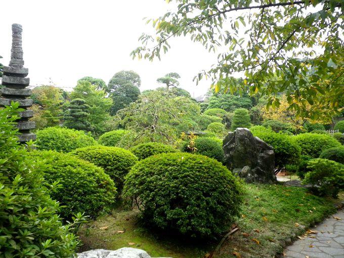 日本庭園の木々
