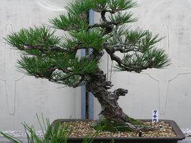 飾りの松は実は売り物?!日本庭園の宿・サンバレー伊豆長岡