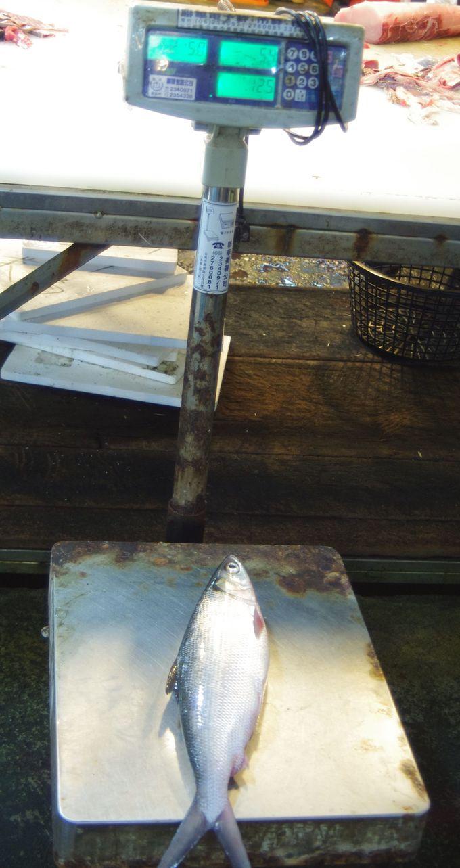 台南を代表する魚について