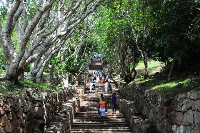 スリランカらしいプルメリアのトンネルを抜けて遺跡に向かう