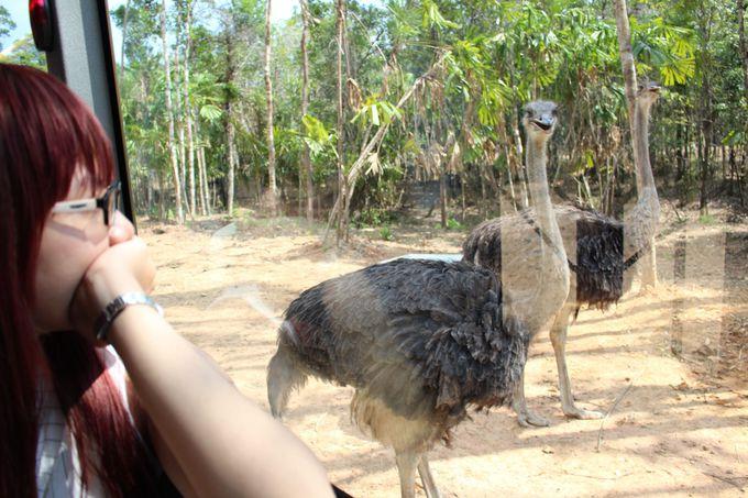 サファリパークで動物の生態を観察