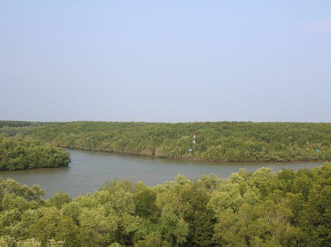 巨大マングローブの森がカンザー最大の名所
