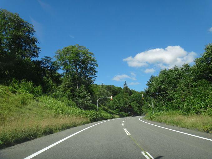 森林浴をしながらのドライブ