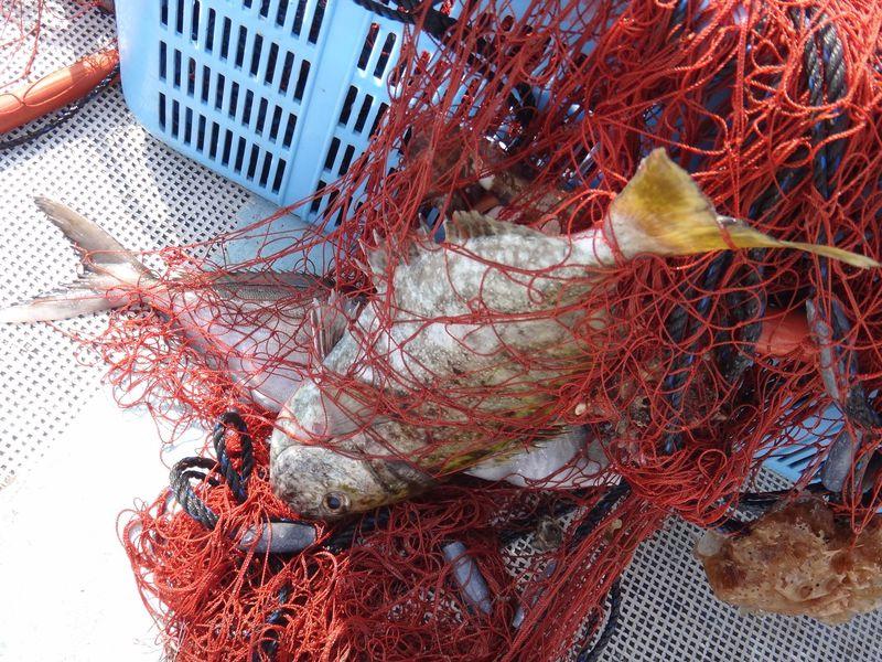 上ノ加江漁港(高知)で漁業体験!釣った魚はその日の夕食に!!