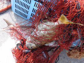 上ノ加江漁港(高知)で漁業体験!釣った魚はその日の夕食に!!|高知県|トラベルjp<たびねす>