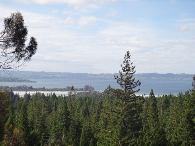 ロトルア湖を上から眺めて
