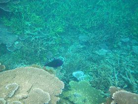 レダン島に上陸!コーラルレダンアイランドリゾートでキレイな海とリゾート気分を楽しむ旅