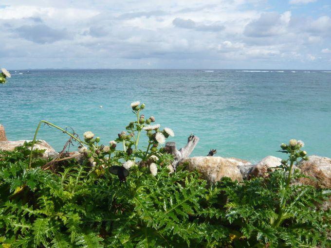 沖縄の海をシーカヤックツアーで探検!