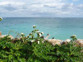 沖縄を学びながら滞在!「シーサイドインなきじん海辺の宿」|沖縄県|トラベルjp<たびねす>