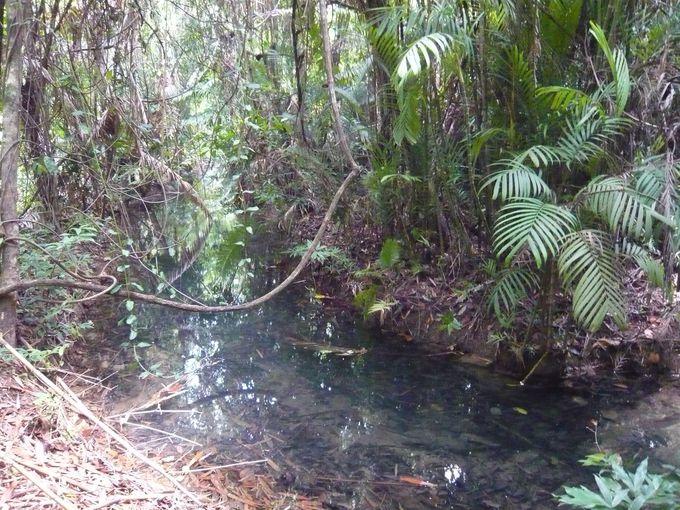 森林浴をしながら天然温泉の露天風呂へ!