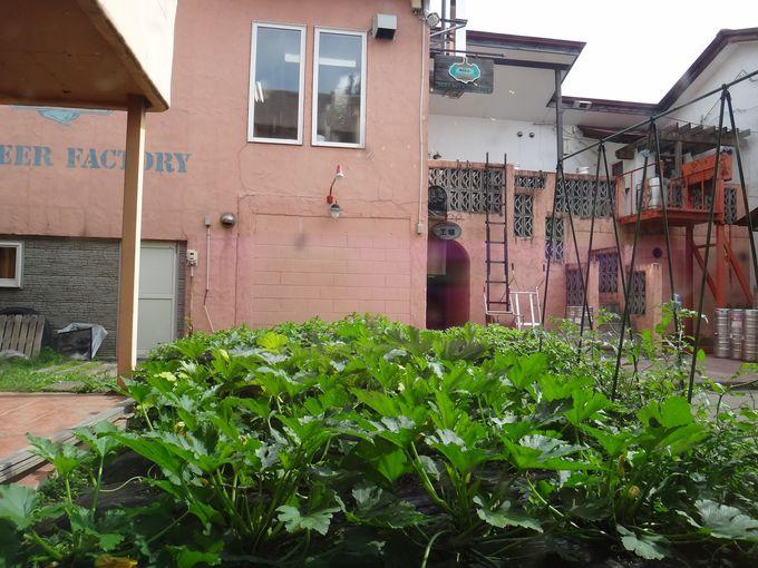 併設工場と中庭菜園