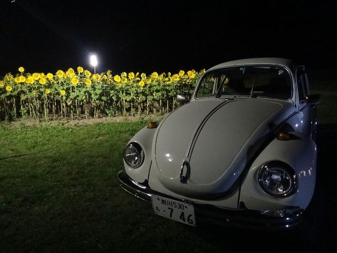 映画「星守る犬」のような、ひまわり畑と車の風景