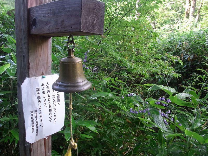 本州最大の湿原、尾瀬ヶ原で自然満喫ハイキング入門ガイド
