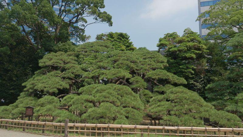 都会の喧騒を忘れる緑豊かな将軍の庭・東京「浜離宮恩賜庭園」
