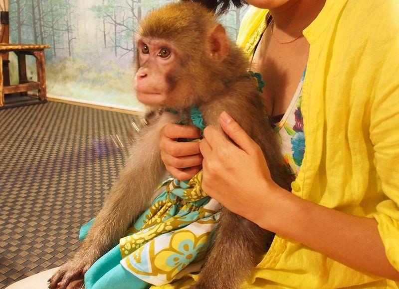 宇都宮に外国人殺到!猿のおもてなしが熱い居酒屋「かやぶき」