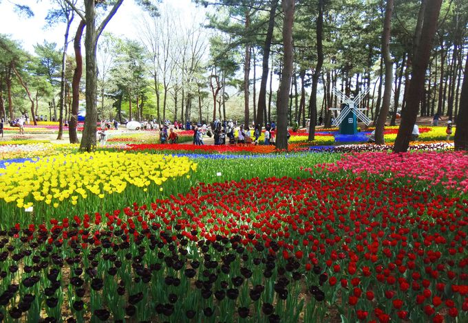 春を感じさせる可愛らしい花々も!