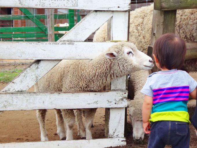 マザー牧場にはその他にも楽しみがいっぱい!