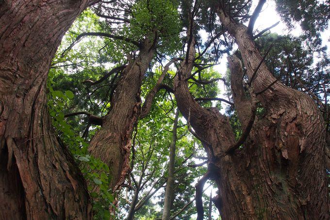 7.幻想の森