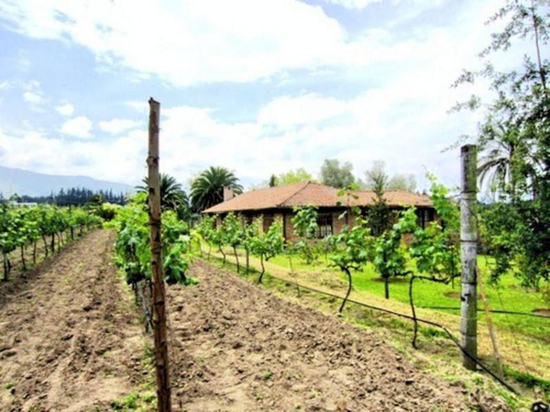 超希少な南米ワインを求めて赤道直下のエクアドルへ