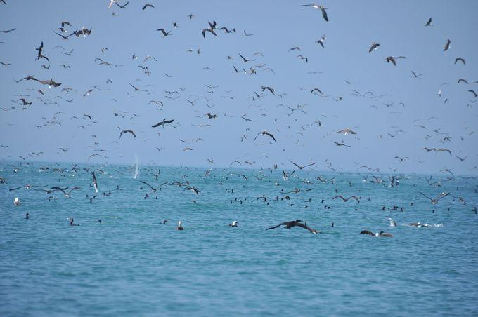 とてつもない鳥の大群