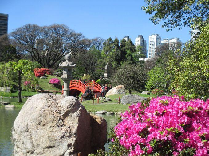 本格的な日本庭園