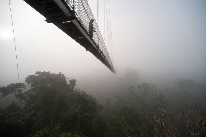 圧巻の吊り橋