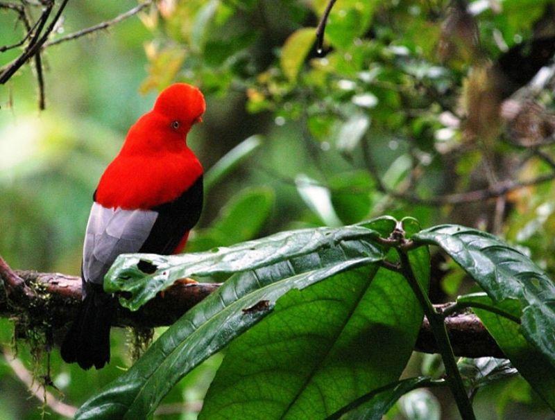 エクアドル鳥の楽園!かわいい森の中に佇む「サチャタミア ロッジ」