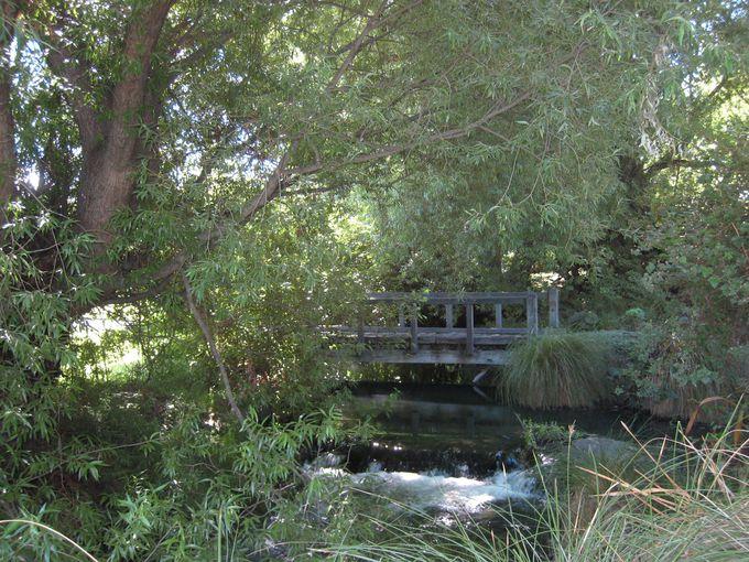 敷地内にはイギリスの片田舎を想像させる庭も