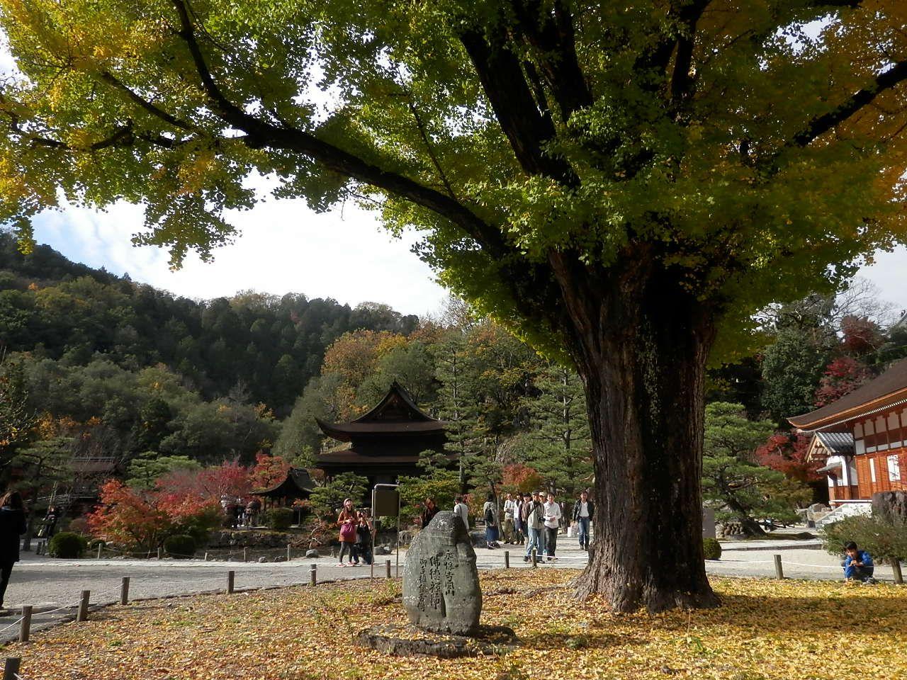 境内にある大銀杏は樹齢700年の人気撮影スポット