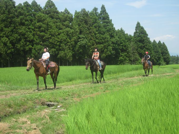 乗馬の基本は馬場で練習、その後トレールへ
