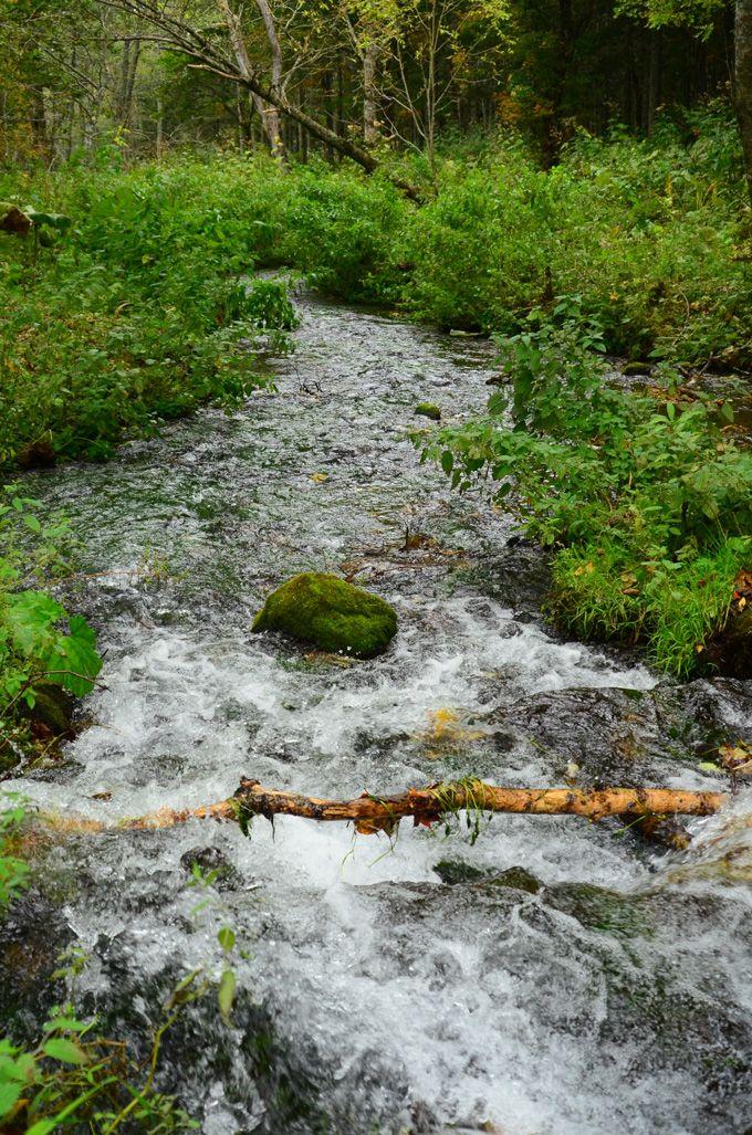 小川のせせらぎでリラックス。フィトンチットの効果も!