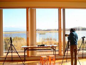網走市「濤沸湖水鳥・湿地センター」で冬の使者・白鳥に出逢う旅!