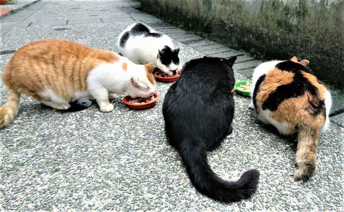 かわいい猫があちこちに
