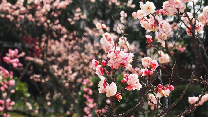春の渉成園