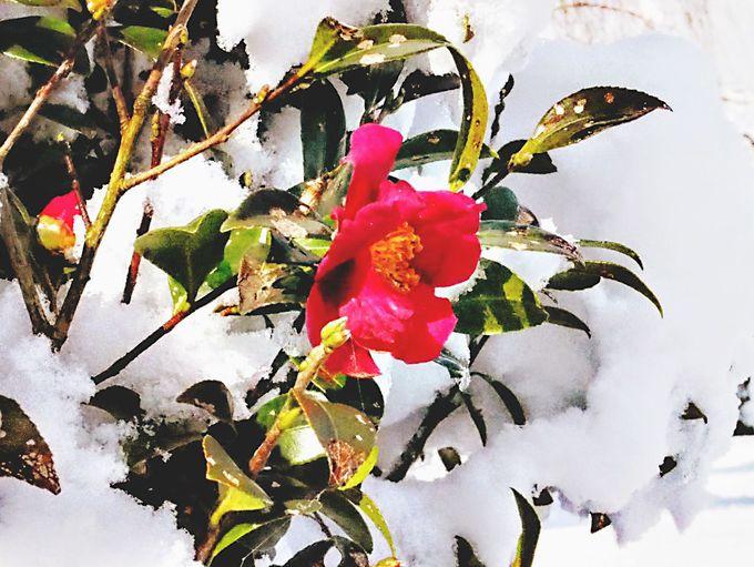 冬の渉成園