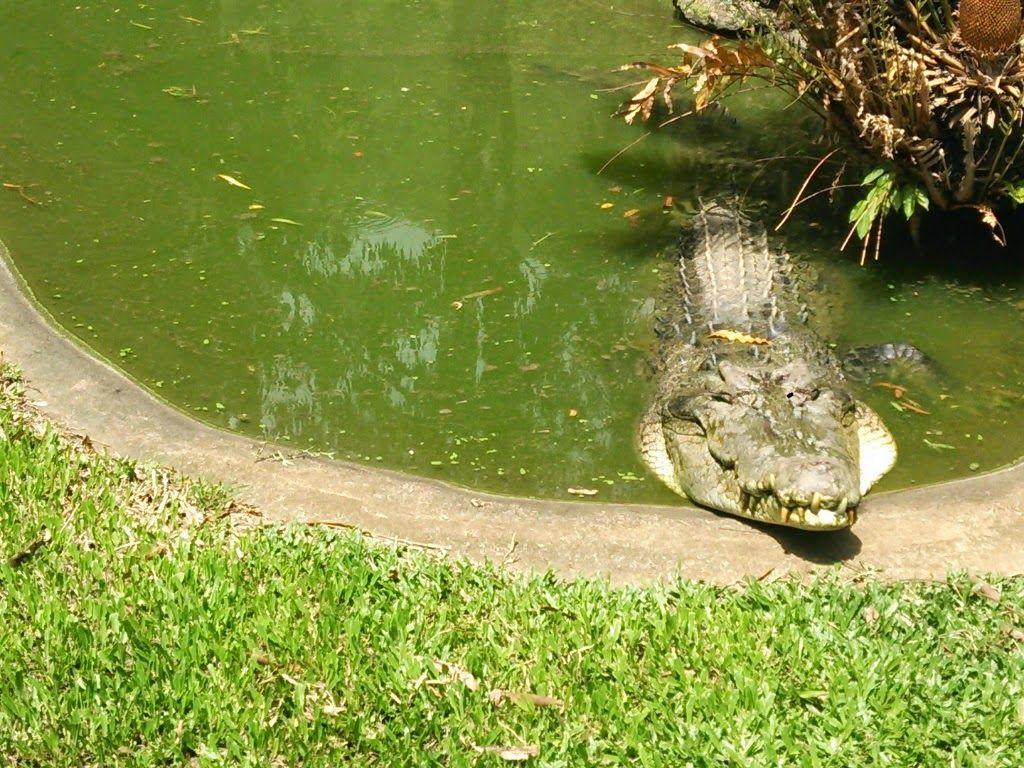 クロコダイルの池を渡る