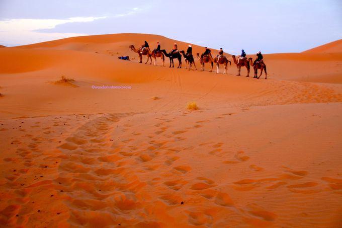 ツアーのハイライト、ラクダに乗って大砂丘へ