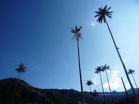 世界一高いヤシの木と世界遺産のコーヒー生産地、コロンビアの小さな町『サレント』