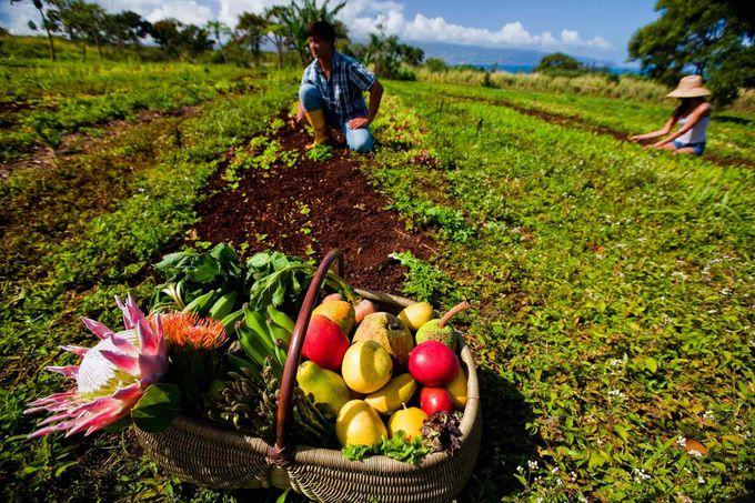 シェフの魂が宿ったアレンジ料理。ハワイの食改革「ハワイ リージョナル キュイジーヌ」