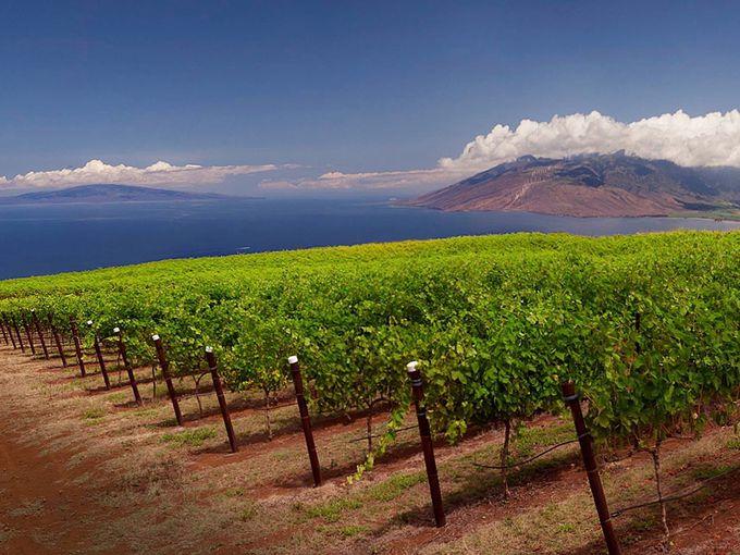 ハワイならでは!パイナップルワインも味わえるワイナリー