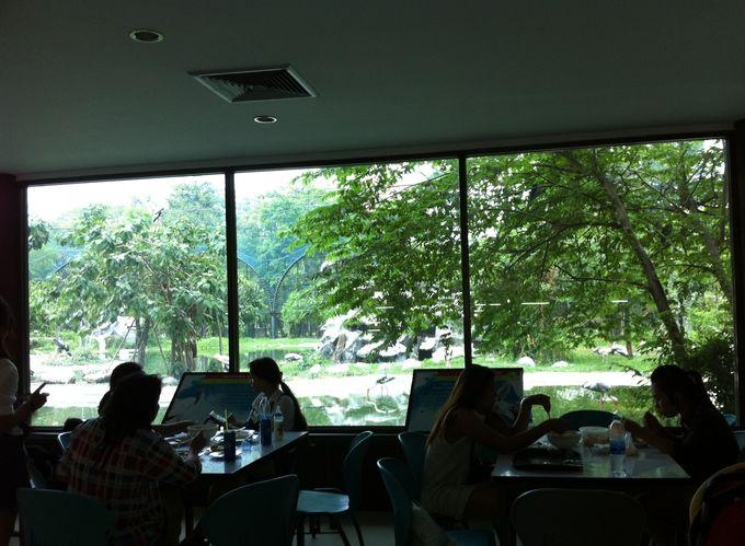 鳥類を眺めながらの昼食