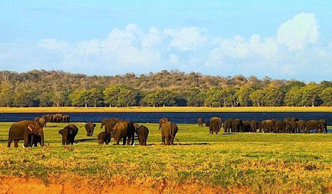 象に会えるチャンスが高い「ミンエリヤ国立公園」サファリ・ツアー