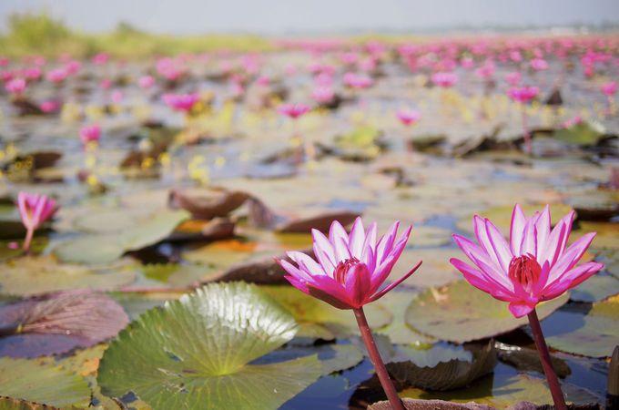 ピンクに染まる水平線。奇跡の絶景は早朝から午前中まで!